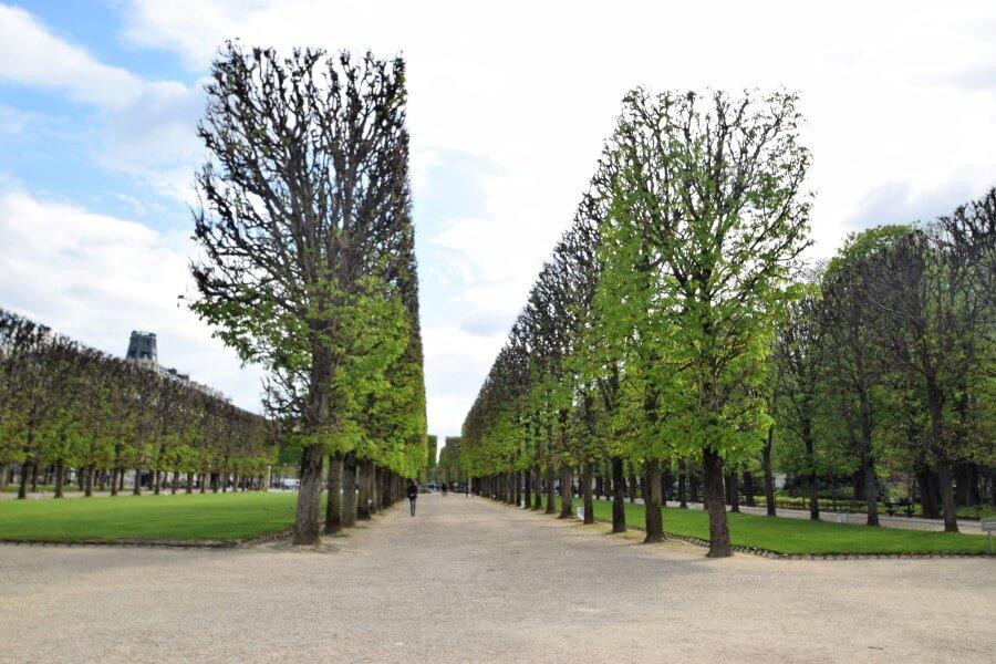 Luxembourg Garden green trees