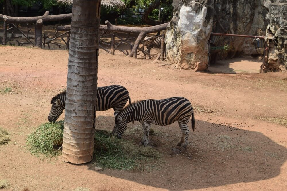 Safari world Bangkok family friendly activities